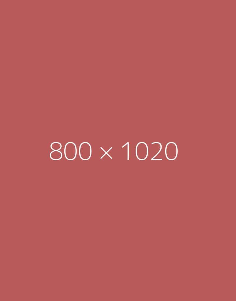 hongo-800x1020-e-ph