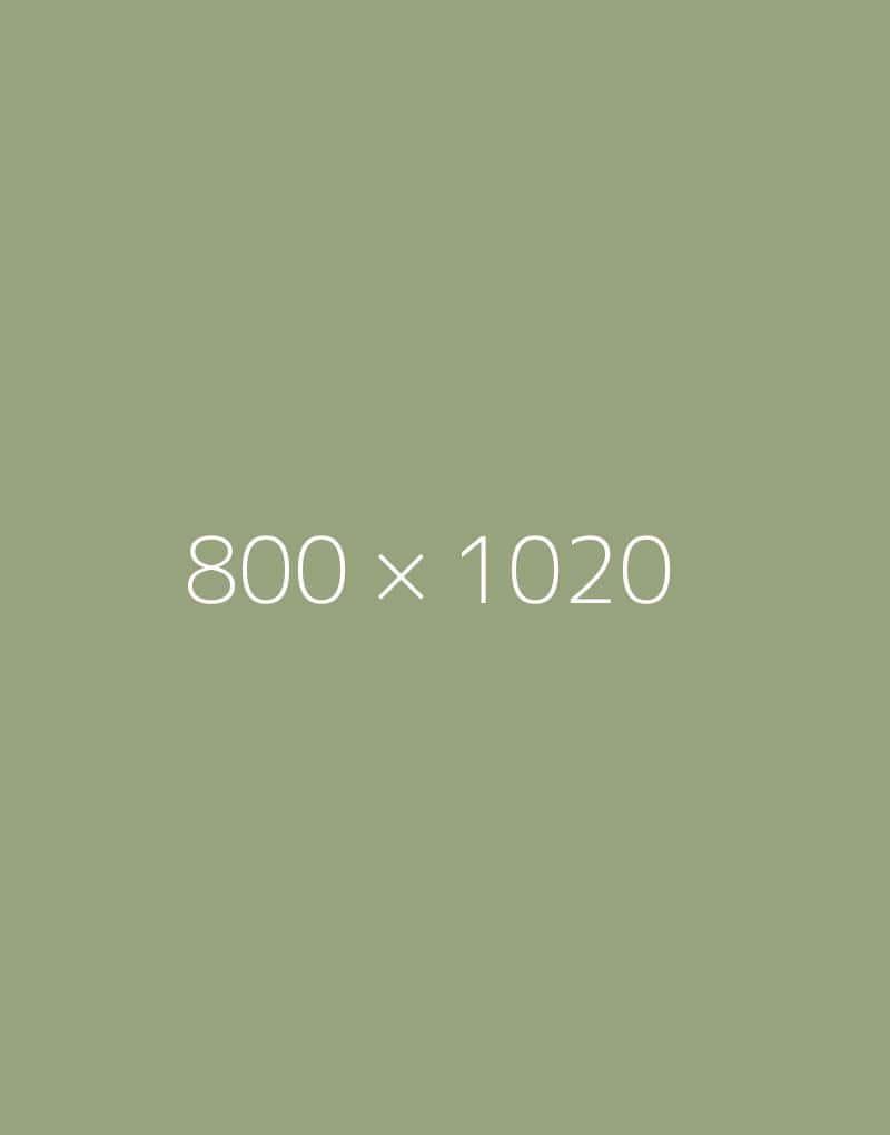 hongo 800x1020-b-ph