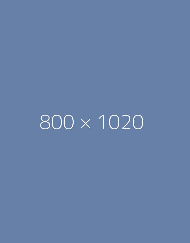 hongo 800x1020-a-ph